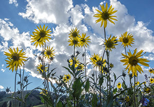 Wildflower Festival: Washington Gulch Wildflowers
