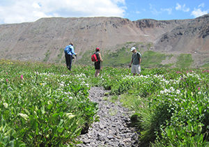 Wildflower Festival: Waterfalls and Wildflowers of North Pole Basin